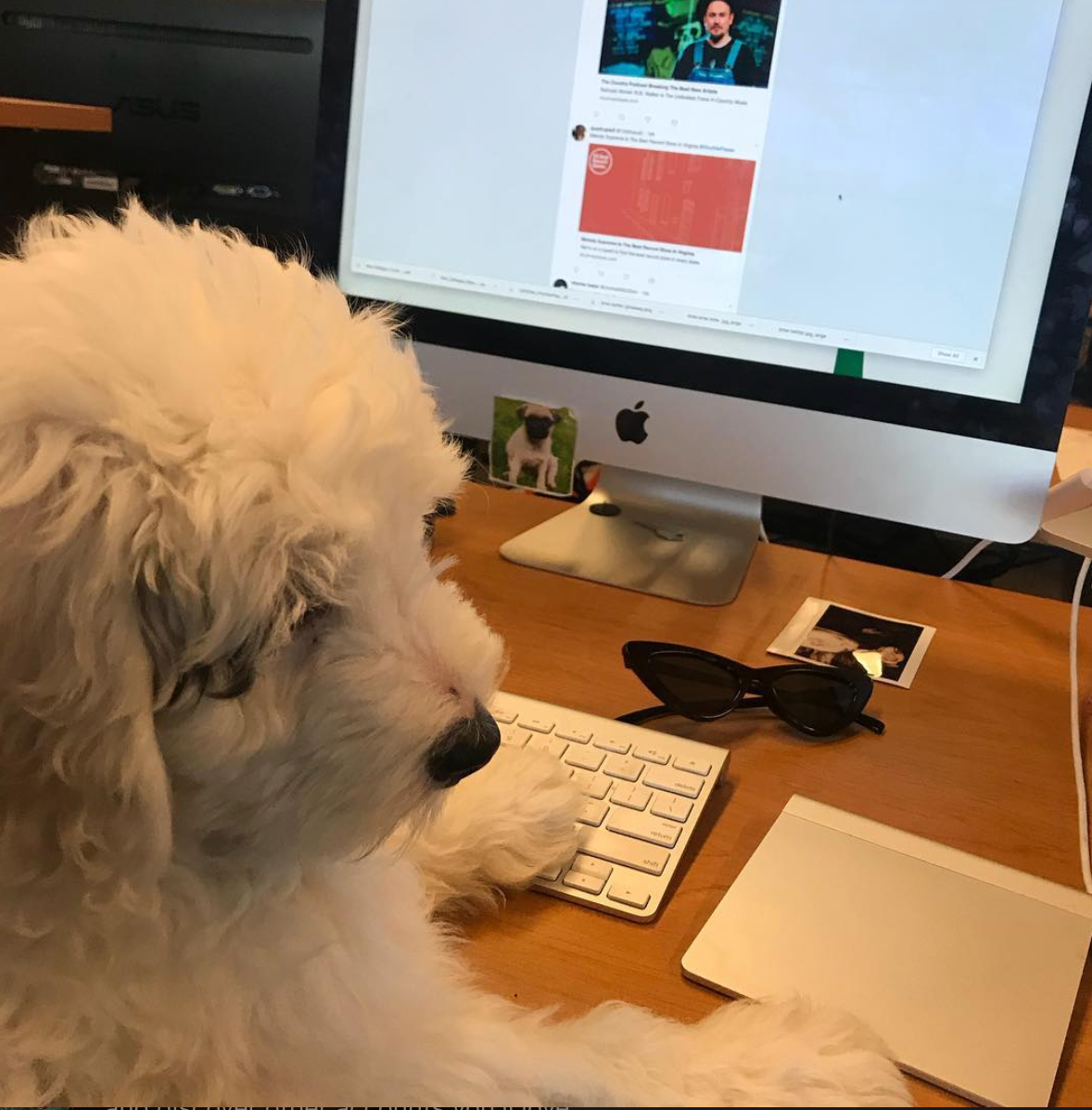 Prince Teddy, seen here managing our socials, got only one vote as best office dog. From his owner, Cam.